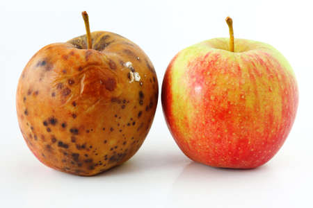 spoiled one bad red apple on white background Healthy and rotten apples Stock Photo - 15403354