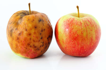 dry fruit: spoiled one bad red apple on white background Healthy and rotten apples