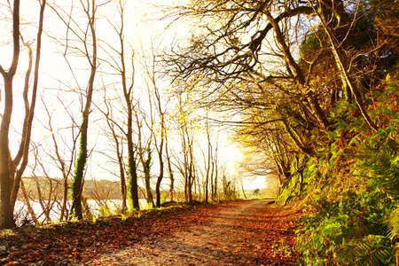 Autumn Pathway. Co.Cork, Ireland. Park Road. Landscape with the autumn forest. Orange leaves in the foreground. Stock Photo - 18733229