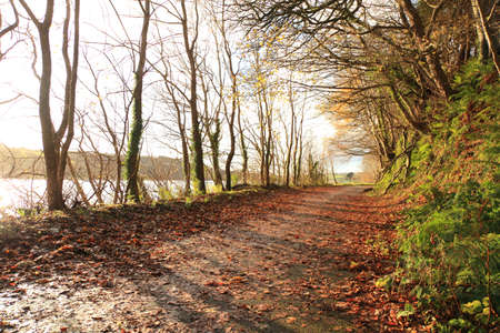 Autumn Pathway. Co.Cork, Ireland. Park Road. Landscape with the autumn forest. Orange leaves in the foreground. Stock Photo - 19008544