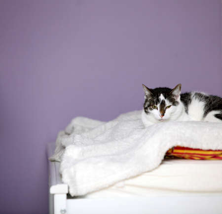 big home cat is lying on a bed - symbol of comfort photo