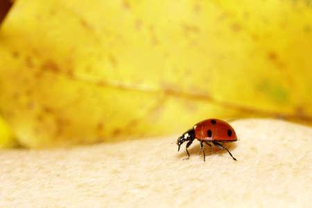 red ladybug on woman hand ladybird human skin nature spring photo