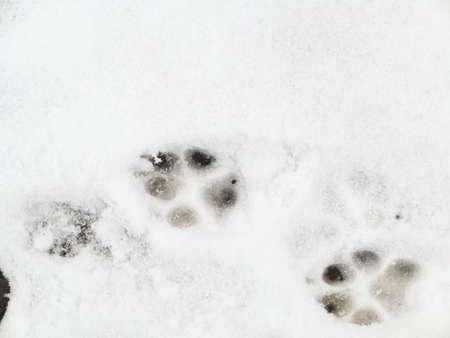 animal tracks: Animal Tracks impronte nel fresco paesaggio invernale neve Archivio Fotografico