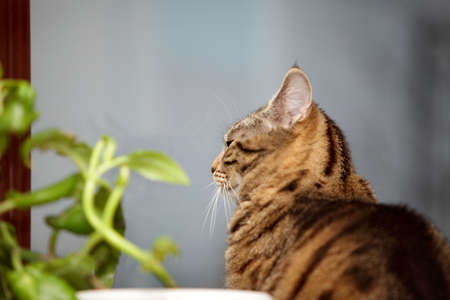 fester: Tabby cat and flower on the window Stock Photo
