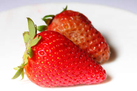 mouldy: healthy and rotten spoiled bad red strawberries on white plat.e. Food waste.