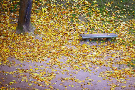 Autumn scenery. Bench and yellow maple leaves in city park, beautiful gold fall. photo