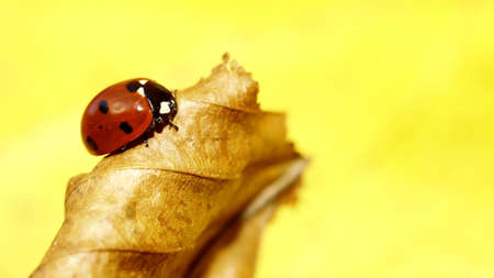 red ladybug on a leaf photo