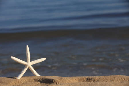 Starfish in the beach sand at ocean background. Summer vacation symbol photo