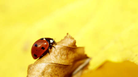 red ladybug on woman hand ladybird nature spring photo