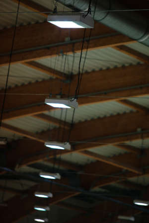 celling: Group of electric lamps on sport stadium celling indoor  Light power and energy