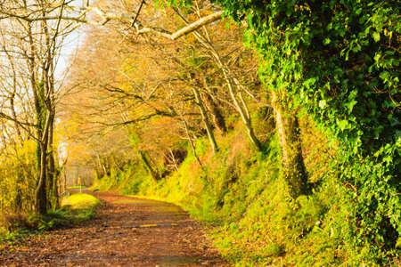 road autumnal: Autumn Pathway alley Co.Cork, Ireland. Park road landscape with the autumnal forest. Orange trees leaves. Stock Photo