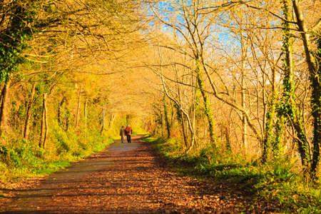 co cork: Autumn pathway alley Co. Cork, Ireland.
