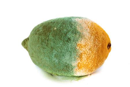 spoilage: Closeup of green moldy lemon citrus fruit isolated on white. Damaged food.