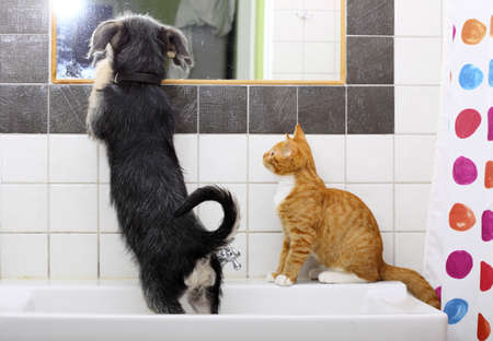 bathroom mirror: Animals pets at home dog puppy mutt and little red cat kitten playing together in bathroom sink looking at mirror