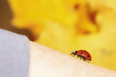 red ladybug on woman hand ladybird human skin nature spring photo