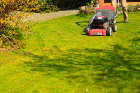Gardening  Mowing green lawn with red lawnmower in spring day  photo