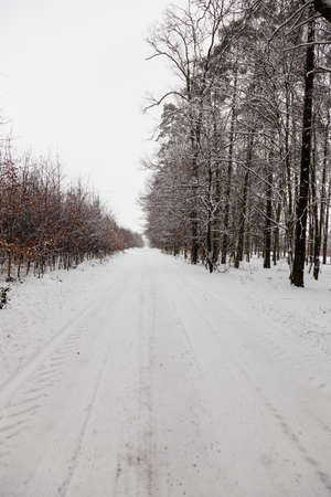specific: Winter season and seasonal specific. Snowy alley road in forest. Stock Photo