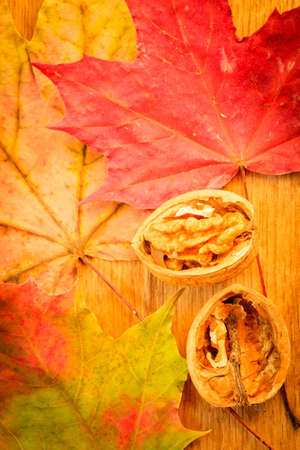 Walnut on colorful autumn leaves. Autumnal background photo