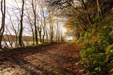 road autumnal: Autumn Pathway. Co.Cork, Ireland. Park Road. Landscape with the autumnal forest. Beautiful orange fall leaves.