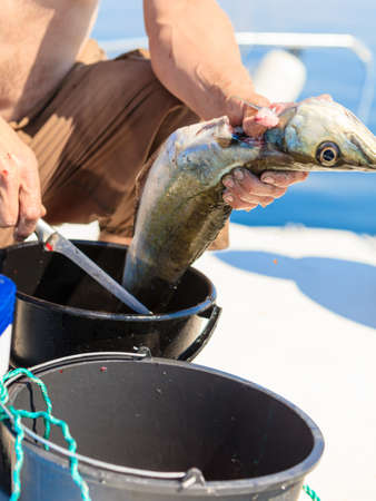 cruelty: Fishing - man angler cleaning preparing fish aboard boat, outdoors. Cruelty to animals.