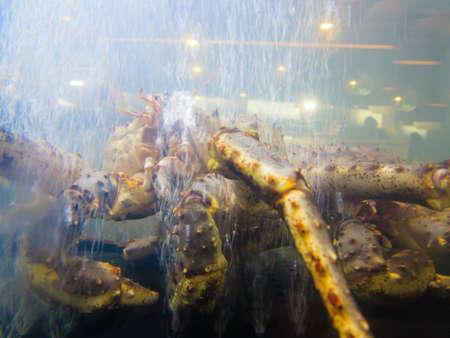 Crab in in aquarium on fish market. Seafood. photo