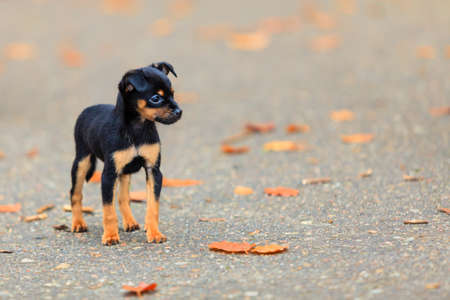 Animals homeless. Little dog cute puppy pet outdoor photo