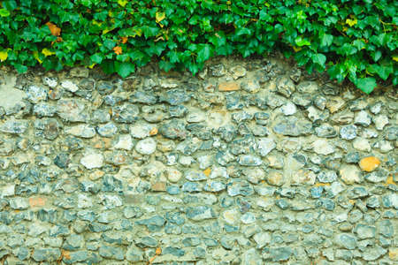 weed block: Gray stone rock wall background and ivy leaves green plants Stock Photo