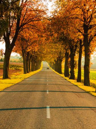 road autumnal: Road running through autumn fall tree alley. Beautiful autumnal landscape, orange foliage Stock Photo