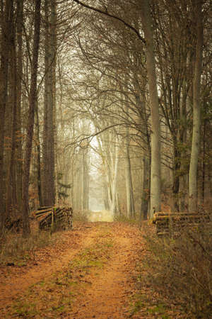 road autumnal: Fall landscape. Country road and pile of wood in the autumn forest. Misty hazy autumnal day.