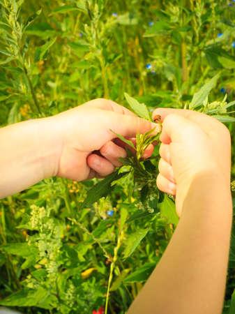 educacion ambiental: Ni�o que juega en el prado verde examinando las flores del campo mirando mariquita en las plantas. La educaci�n sobre el medio ambiente.