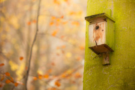 natural setting: Handmade bird house outdoor in autumn forest on the tree. Natural setting no birds.