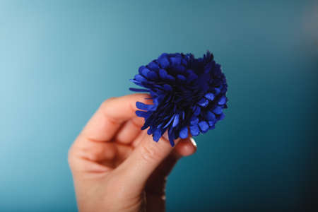 hairpin: Navy blue artificial flower hairpin in female hand Stock Photo