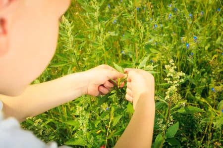educacion ambiental: Niño que juega en el prado verde examinando las flores del campo mirando mariquita en las plantas. La educación sobre el medio ambiente.