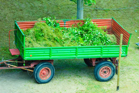 tree works: Works in public park. Tractor - trailer with tree branches. Environment cleaning concept