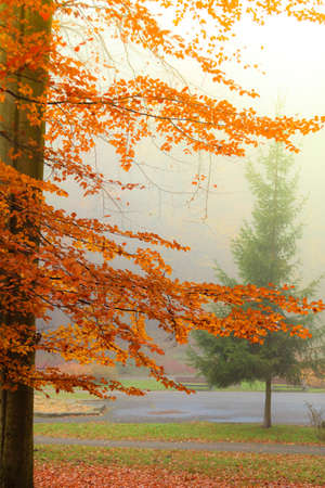 misty autumn park on foggy day. Autumnal scenery, beauty landscape. Fall trees and leaves.