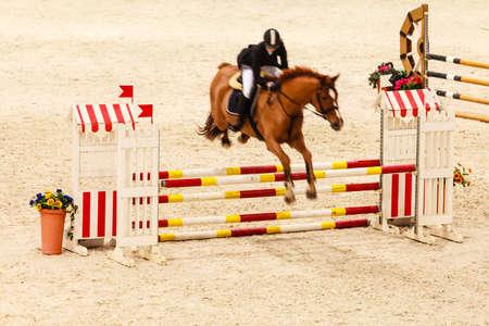 Equitazione. Equitazione concorrenza. Salto ostacoli, cavallo e cavaliere sopra salto