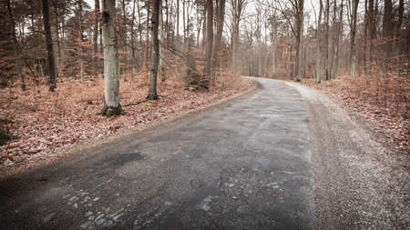 road autumnal: Fall landscape. Country asphalt road in the autumn forest. Misty hazy autumnal day. Stock Photo