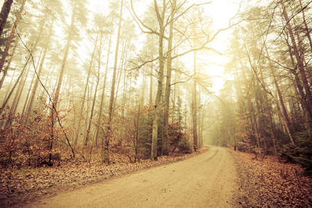 pathway: Pathway through the misty autumn forest on foggy day. Autumnal scenery, beauty landscape. Fall trees and leaves. Stock Photo