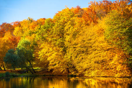 to the other side: Natural landscape. View from shore of the lake or river water and beauty autumn orange trees on the other side.