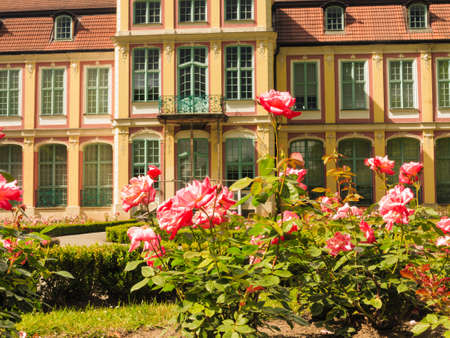 oliva: flowers pink roses and abbots palace landmark in gdansk danzig polish city oliva park. historical building residence house.