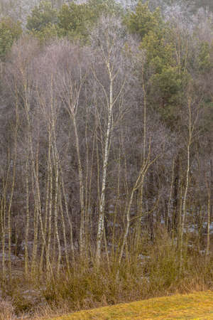 hollows: Nature autumn or winter landscape. Countryside view frosty hilly fields with trees overcast foggy day