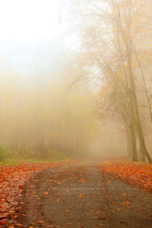 fall beauty: Pathway through the misty autumn park on foggy day. Autumnal scenery, beauty landscape. Fall trees and leaves. Stock Photo