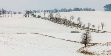 season specific: Winter season and seasonal specific. Hilly fields maedows trees covered with white fresh snow. Countryside landscape