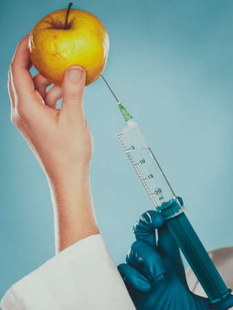 modified: Scientist doctor injecting apple with syringe. Chemist holding genetically modified fruit. GM food modification.