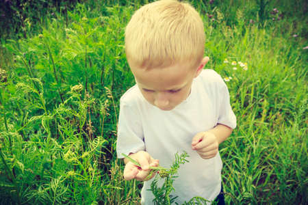educacion ambiental: Chico Niño examinar y recogiendo flores en la pradera. La educación de la conciencia ambiental. La naturaleza verde de verano.