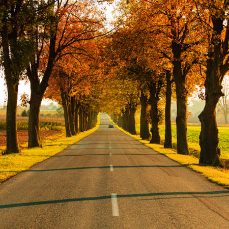 Road running through autumn fall tree alley. Beautiful autumnal landscape, orange foliage Stock Photo