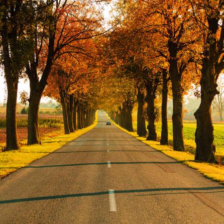 Straße durch Herbst fallen Allee läuft. Schöne herbstliche Landschaft, orange Laub