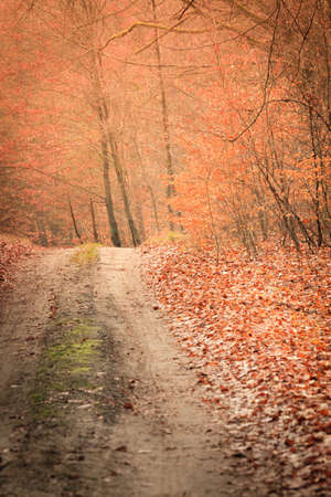 footway: Fall landscape. Country road with red orange leaves in the autumn forest. Sunny autumnal day in Poland Stock Photo