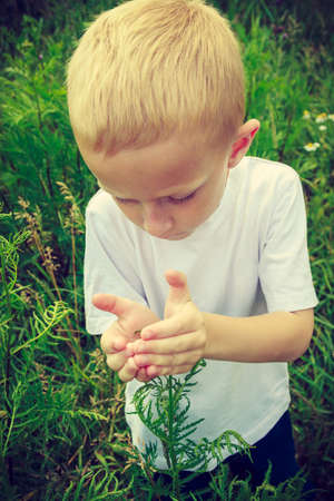 awareness: Child kid examining and picking flowers in meadow. Environmental awareness education. Green summer nature.