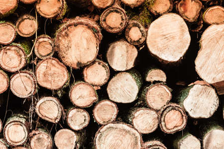 piled: Wooden logs. Timber logging in autumn forest. Freshly cut tree logs piled up as background texture